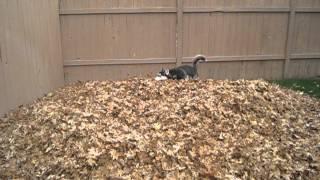 Husky bladeren