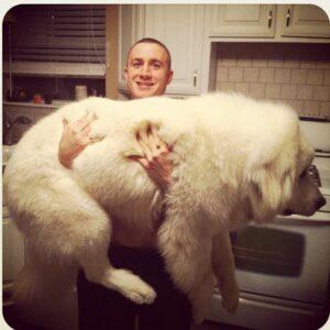 1 gigantische honden