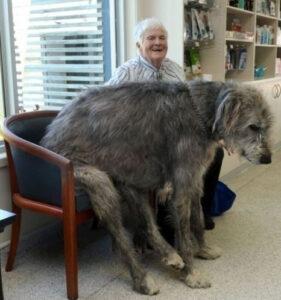 10 gigantische honden