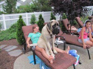 14. gigantische honden