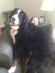3 gigantische honden