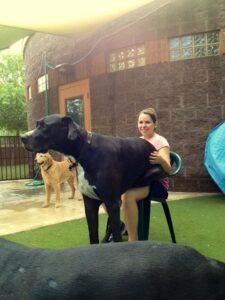 6. gigantische honden
