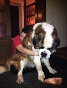 8. gigantische honden