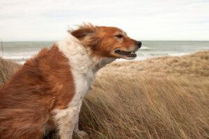 hond zee