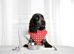 hond voeding
