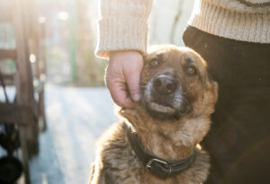 Hond adoptie