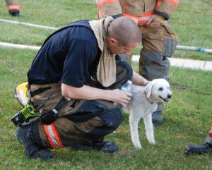 hond gered brandend huis