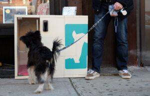 Dog parker1