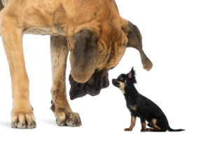 grote kleine hond