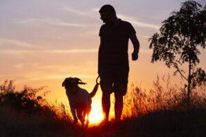 wandelen warmte hond
