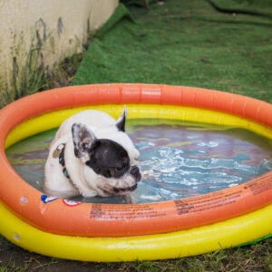 zwembadje hond