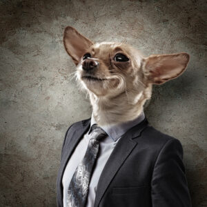 Hond vermenselijking