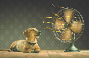 hond te warm