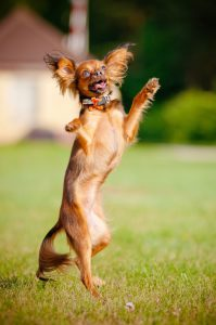 happy honden