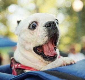 Happy hond