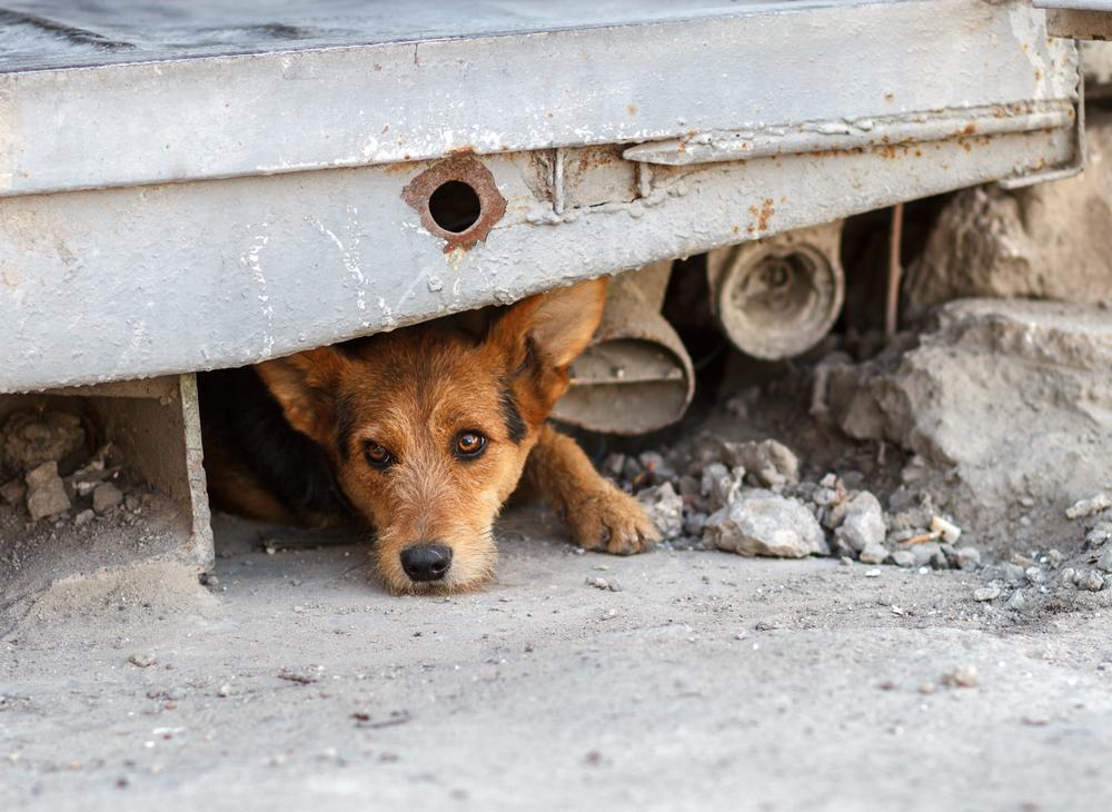 Spanje honden verwaarlozing