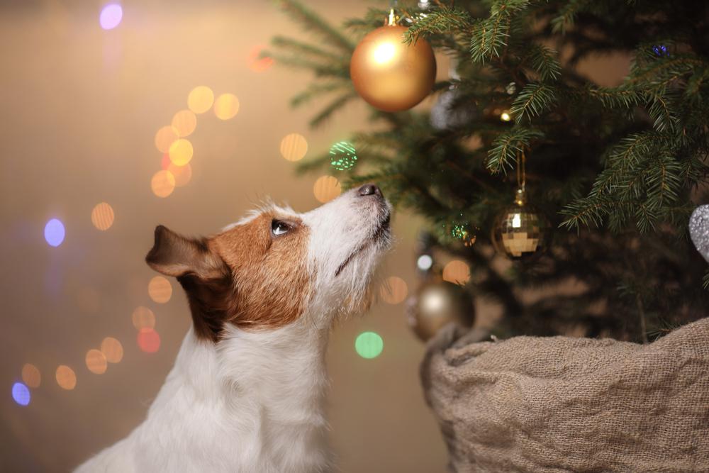kerstboom hond