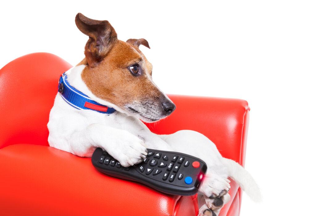 hond tv