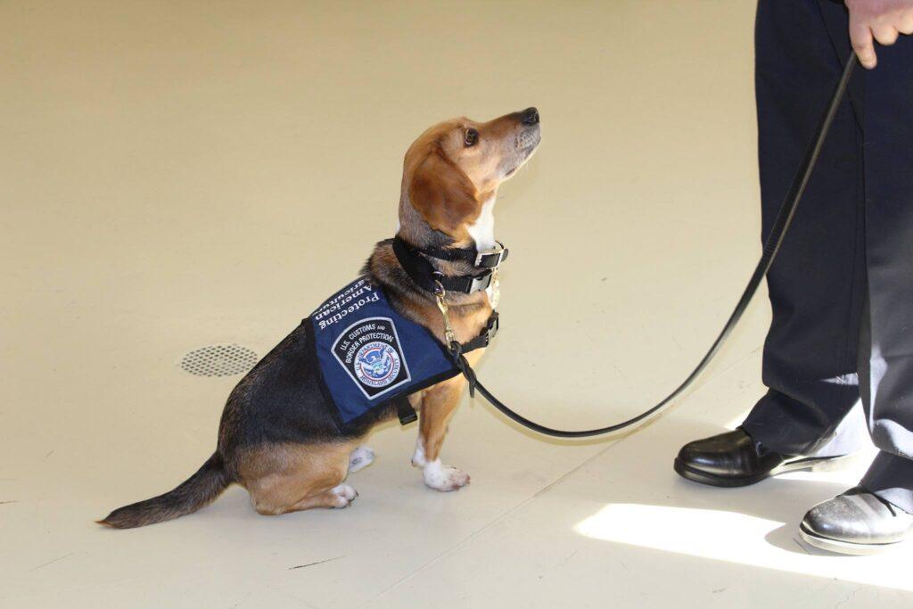 beagle luchthaven