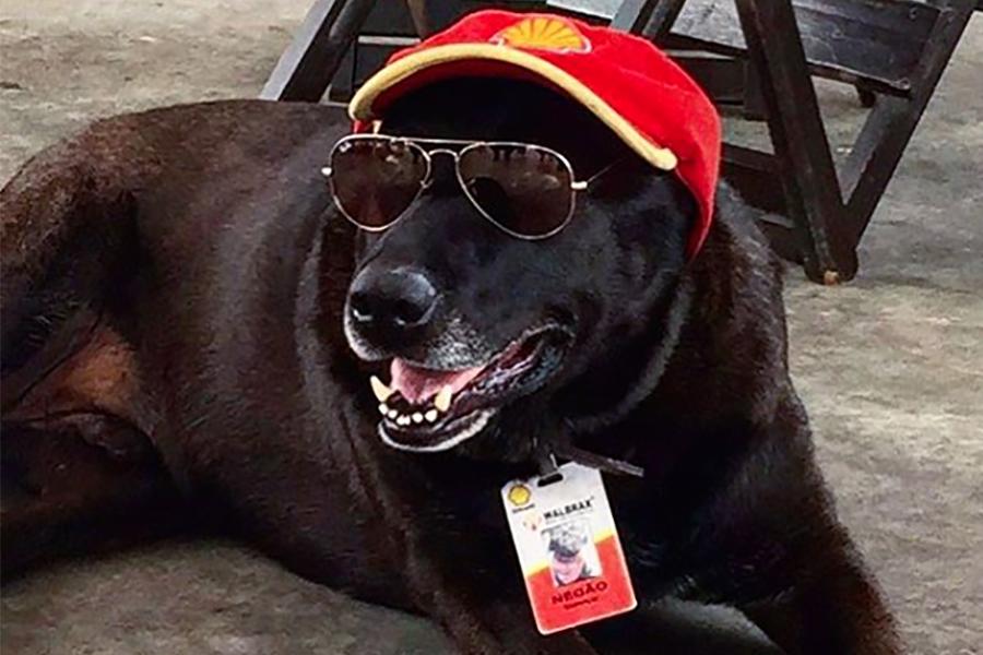 job hond