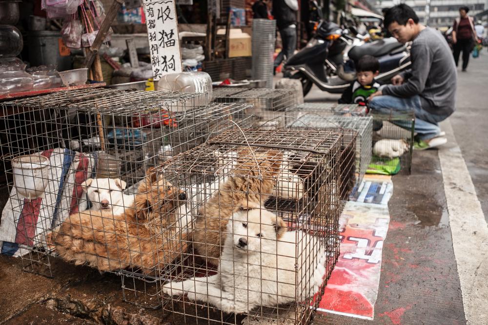 hondenvleesfestival