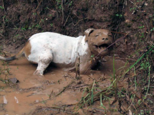 happy vieze hond