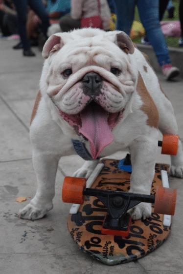 skaterdog